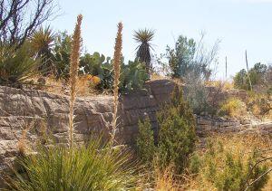 1280px-Living_desert_zoo_2